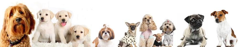 Happy Dogs Day Care Mandurah
